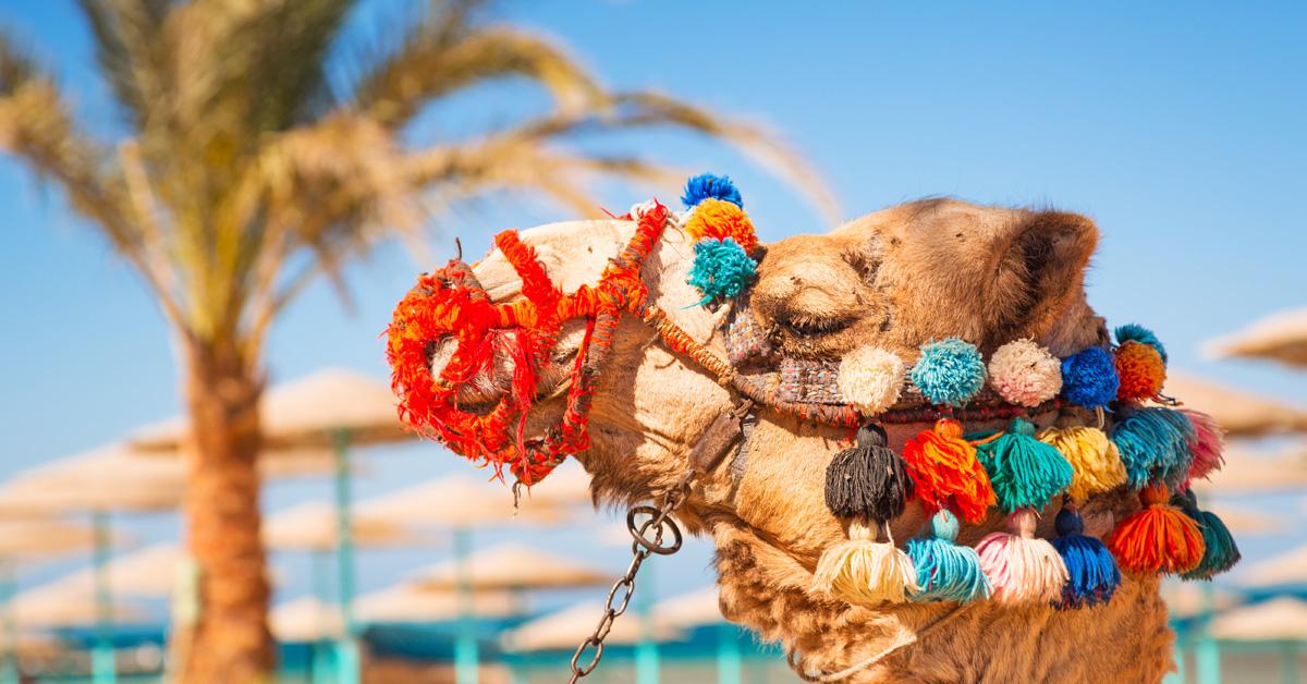 Last minute Hurghada a Safaga