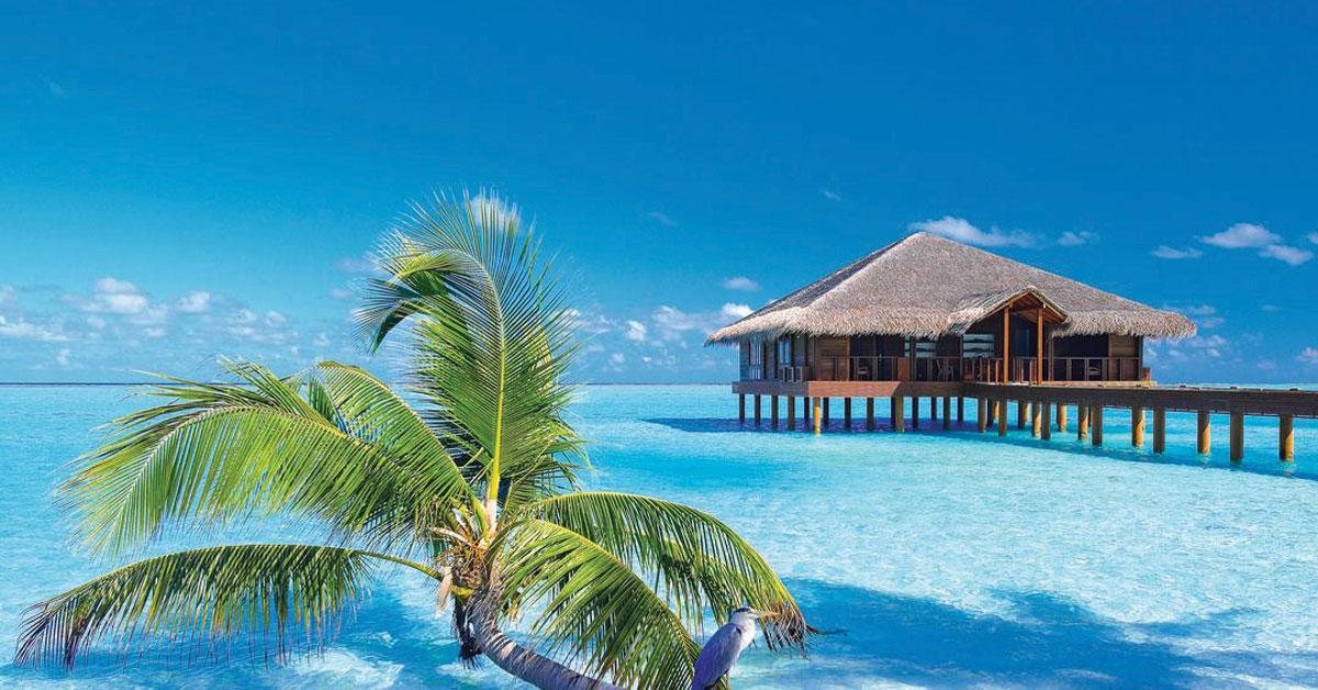 Last minute Maldivy